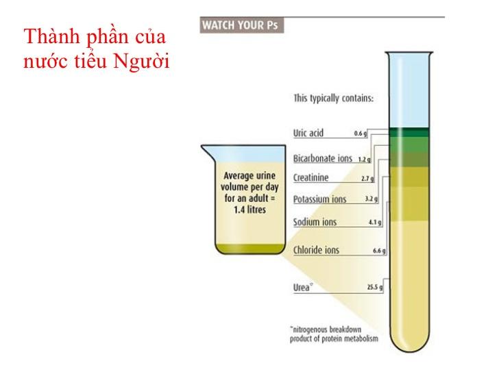 tong-phan-tich-nuoc-tieu